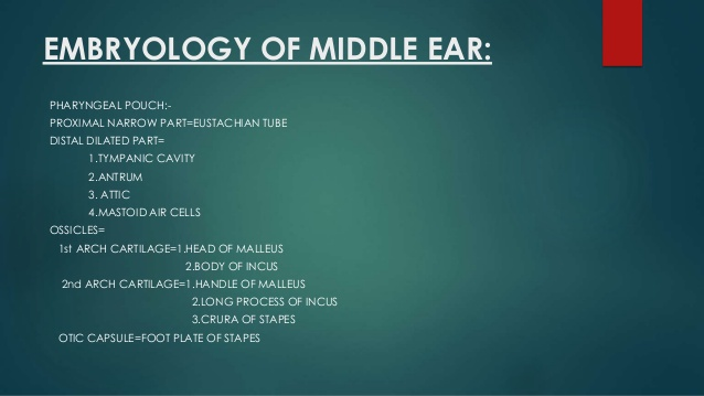 embryology of middle ear